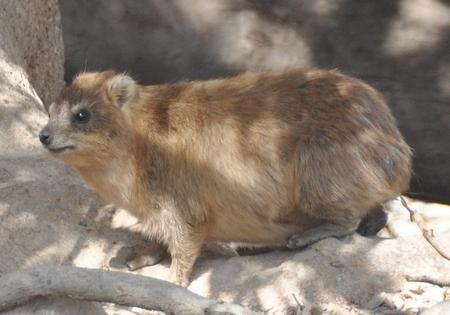 Dit is natuurlijk geen konijn.