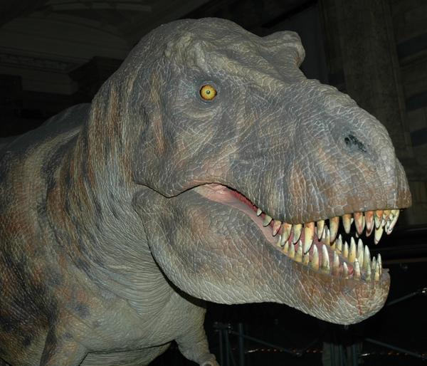 Deze dino heb ik, vermoedelijk, gefotografeerd in het National History Museum in Londen. Maar ik weet het niet helemaal zeker.